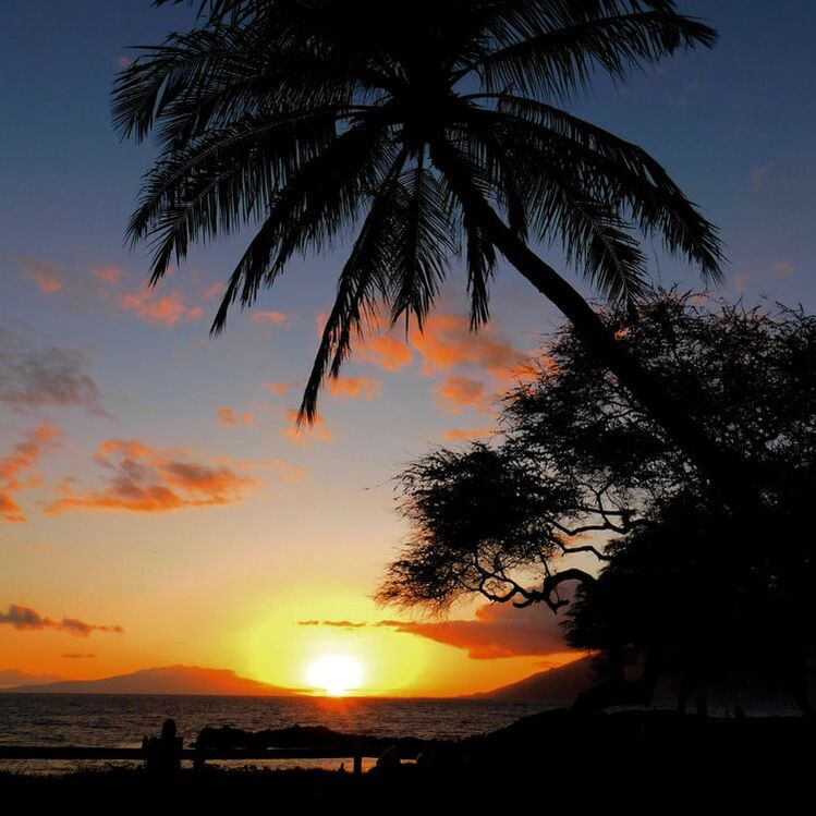 Sunset on Maui near Kihei. Beautiful palm tree on a beautiful beach.Picture